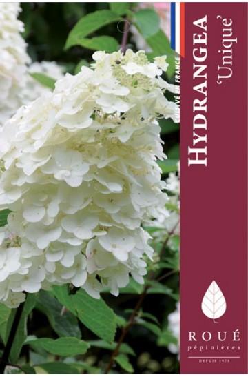 Hortensia paniculata 'Unique'