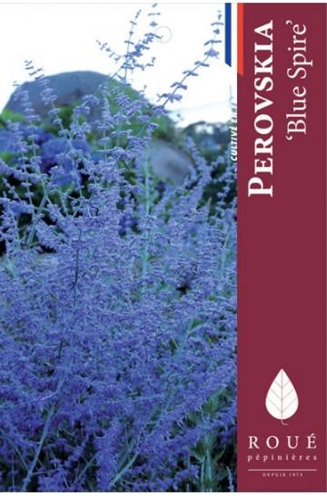 perovskia-blue-spire-lavande-d-afghanistan-rouepepinieres
