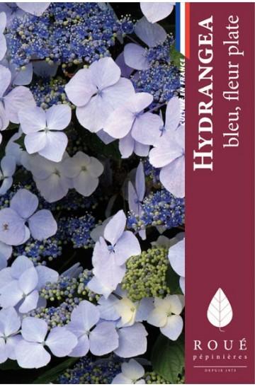 Hortensia macrophylla 'Blaueling'