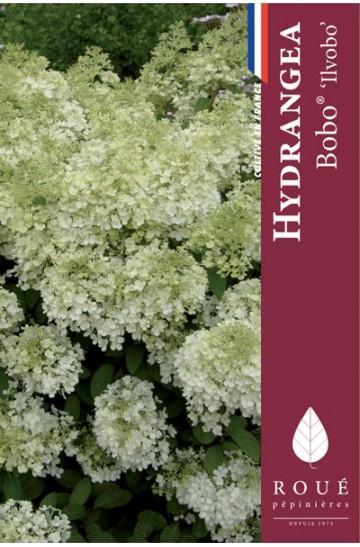Hortensia paniculata 'Bobo®'
