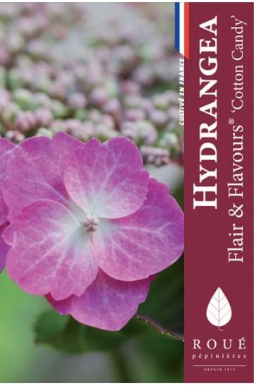 Hortensia serrata 'Flair & Flavours®'