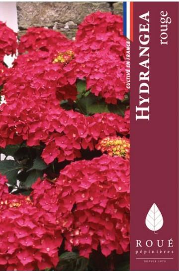 Hortensia macrophylla 'Red Baron'