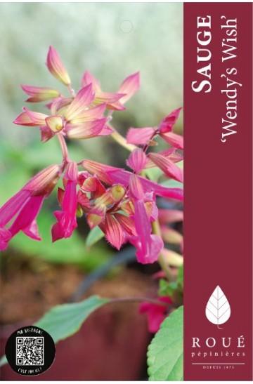 Sauge - Salvia 'Wendy's Wish'