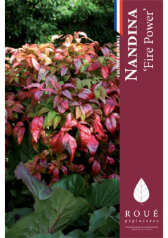 Nandina 'Fire Power'