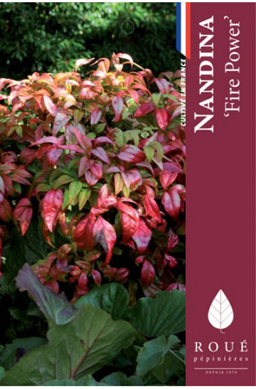 Nandina 'Fre Power'