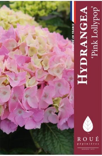 Hortensia 'Pink Lollipop'