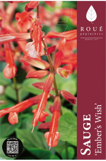 Sauge - Salvia Coral Red® 'Ember's Wish'