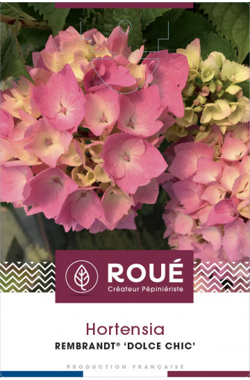 Hortensia Rembrandt® Dolce Chic