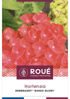 Hortensia Rembrandt® Rosso Glory