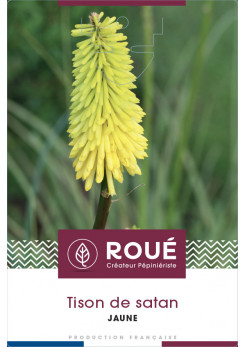 Kniphofia Popsicle® 'Lemon'