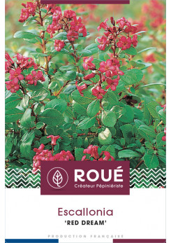 Escallonia 'Red Dream'