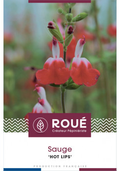 Sauge - Salvia 'Hot Lips'