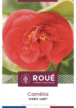 Camelia 'Curly Lady' - Camelia tortueux