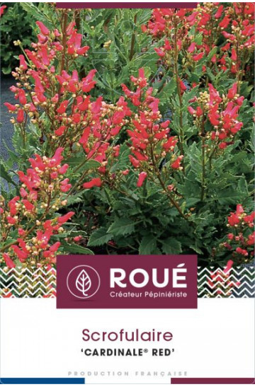 Scrophulaire 'Cardinale® Red'
