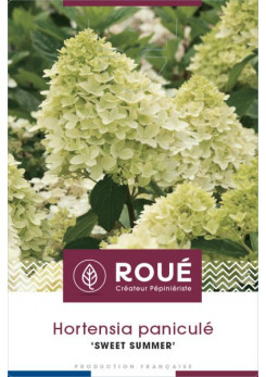 Hortensia 'Sweet Summer'