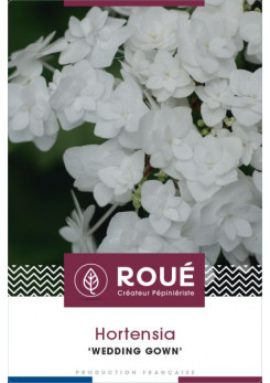 Hortensia macrophylla 'Wedding Gown'