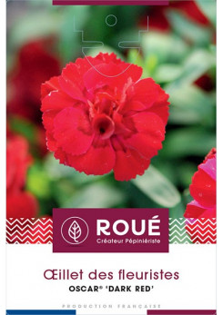 Dianthus Oscar® 'Dark Red'