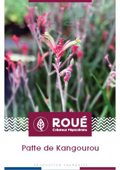Anigozanthos 'Everlasting Red®'