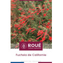 Fuchsia de Californie