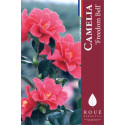 Camelia 'Freedom Bell'
